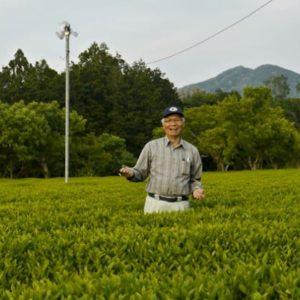 Bio Teegarten der Familie Hayashi in der Präfektur Mie