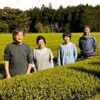Bio Teegarten der Familie Watanabe in der Präfektur Kagoshima