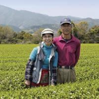 Bio Teegarten der Familie Morimoto in der Präfektur Miyazaki